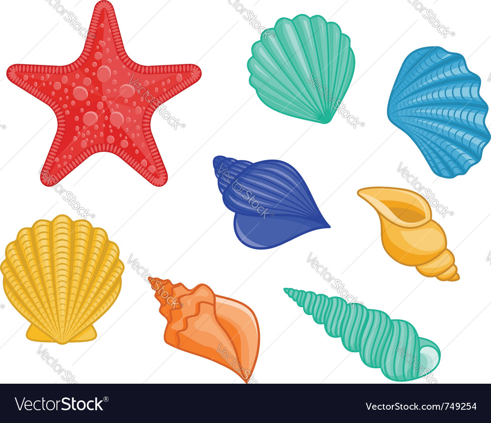 Seashell starfish set vector