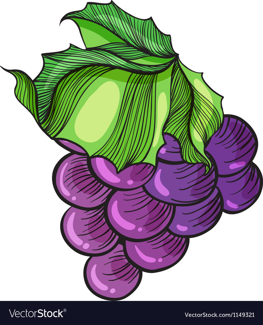 Luscious grape vector