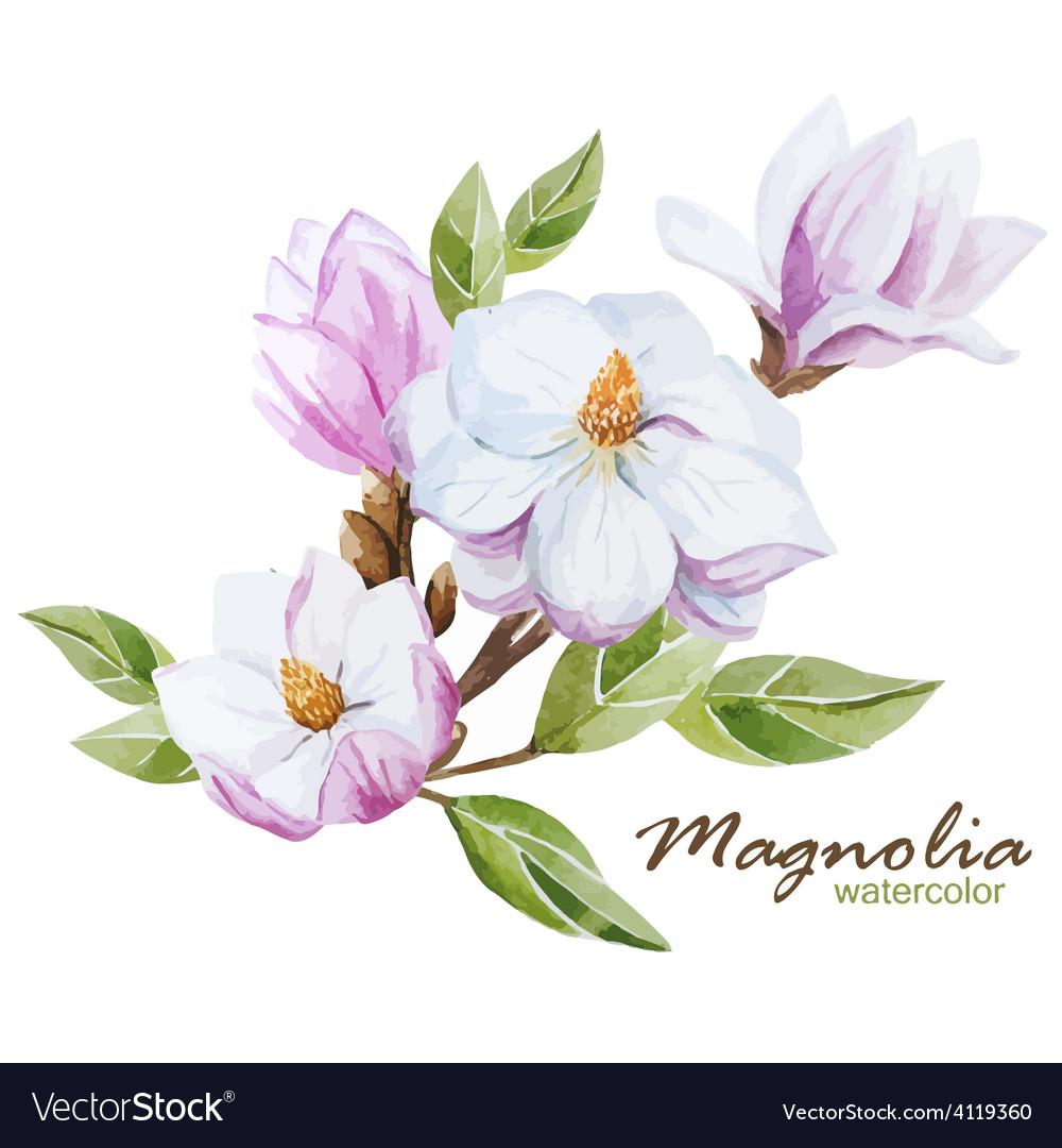 Magnolia set vector