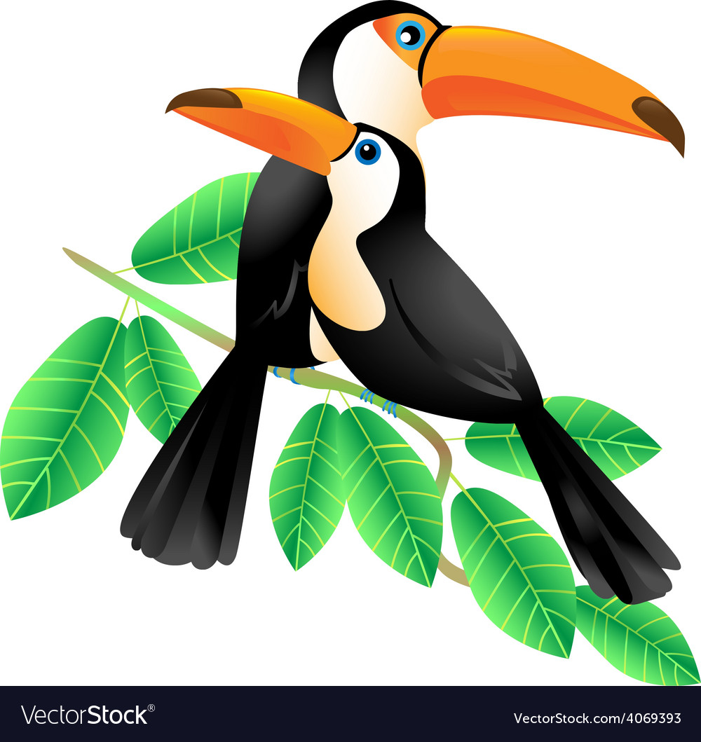 Two toucans sitting on a branch vector