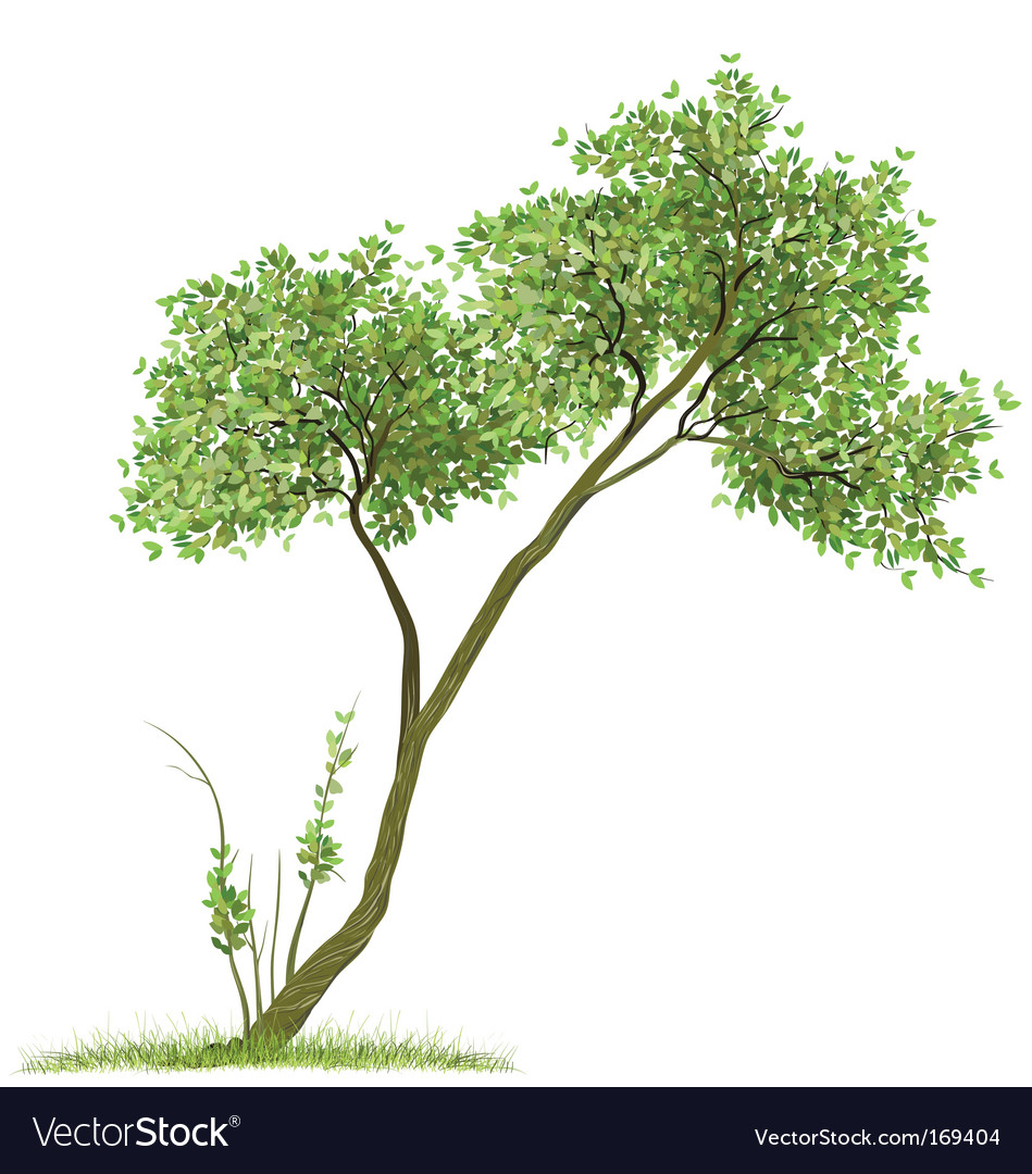 Tree green nature vector