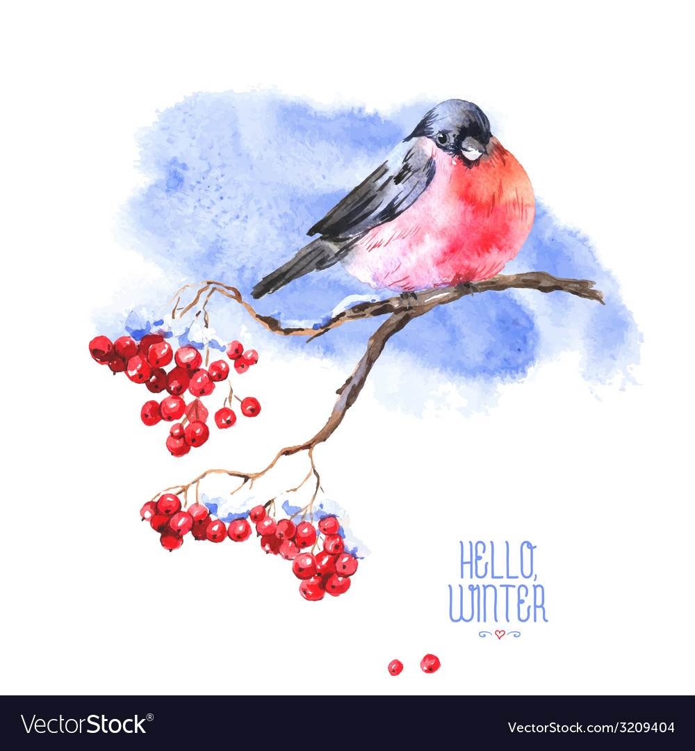 Winter watercolor background with bullfinches vector