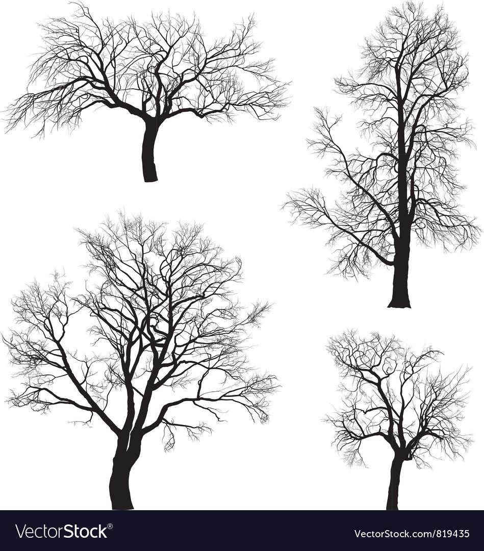 Walnut and chestnut trees vector