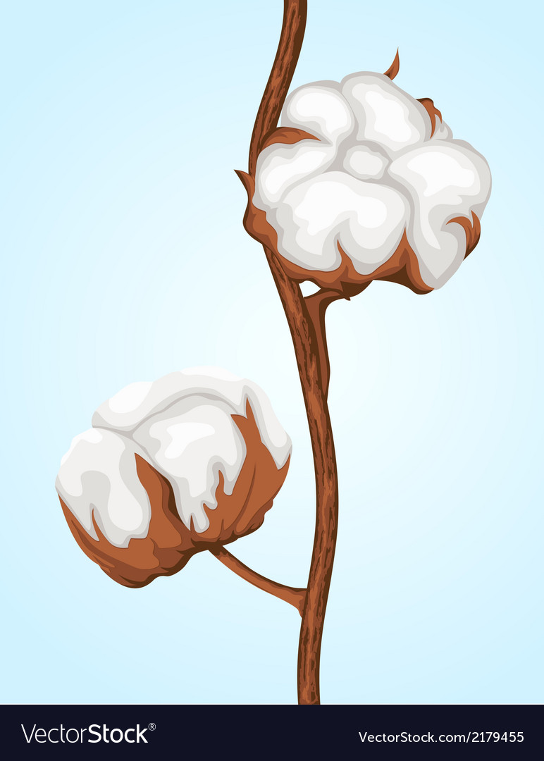 Cotton buds branch vector