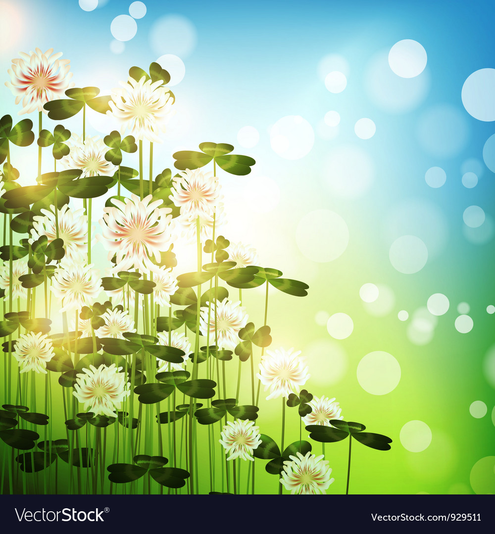 Clover flowers vector