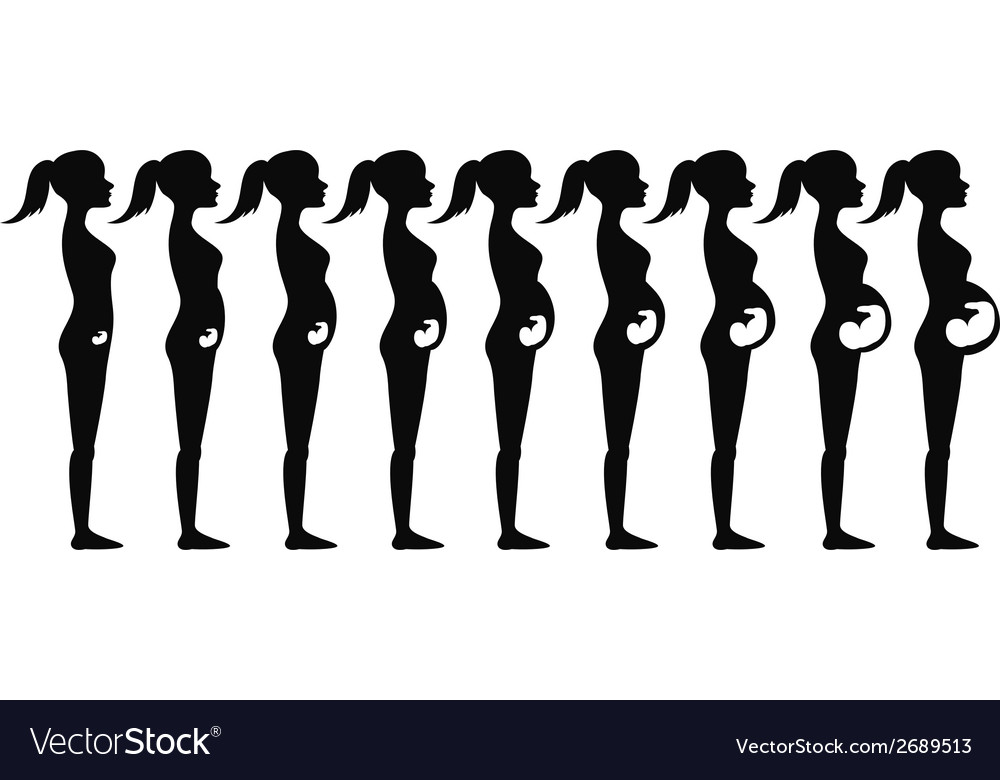 Pregnancy stages silhouette vector