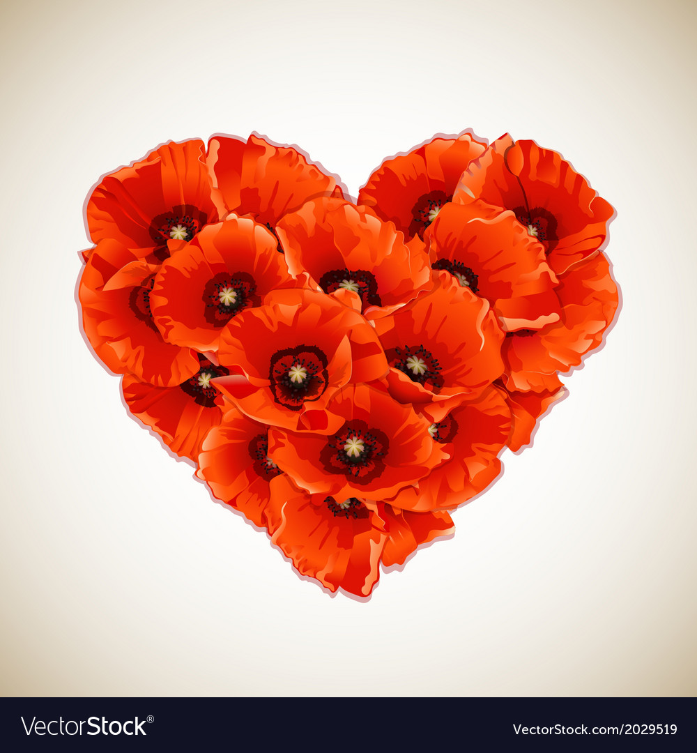 Flower heart of red poppies vector
