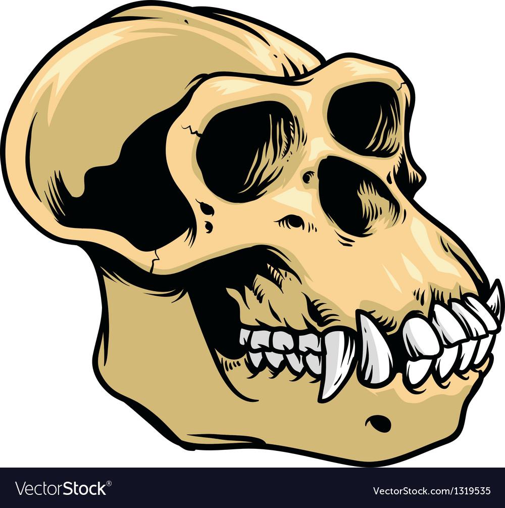 Ape skull vector