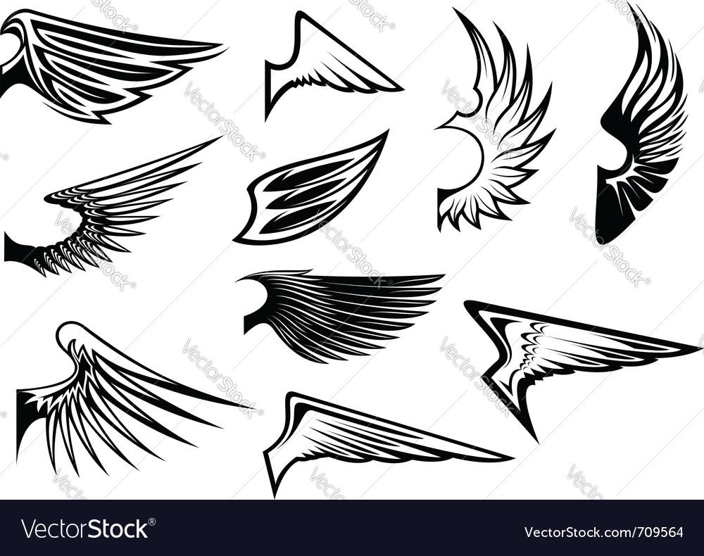 Bird wings vector