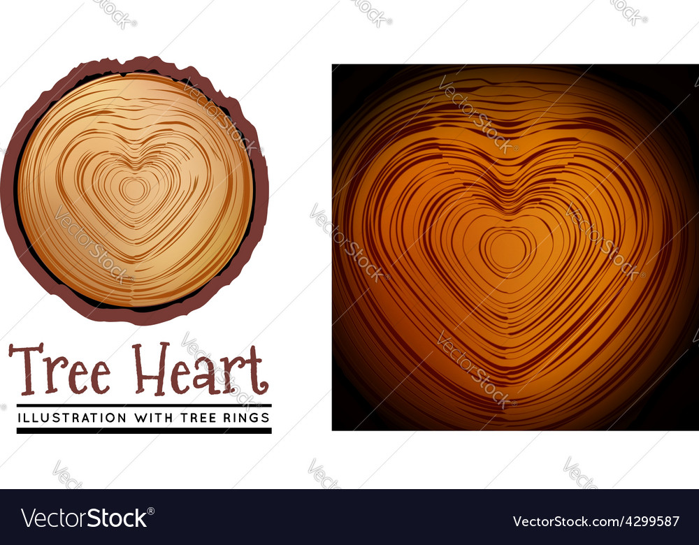 Wooden cross section of the heart shape vector