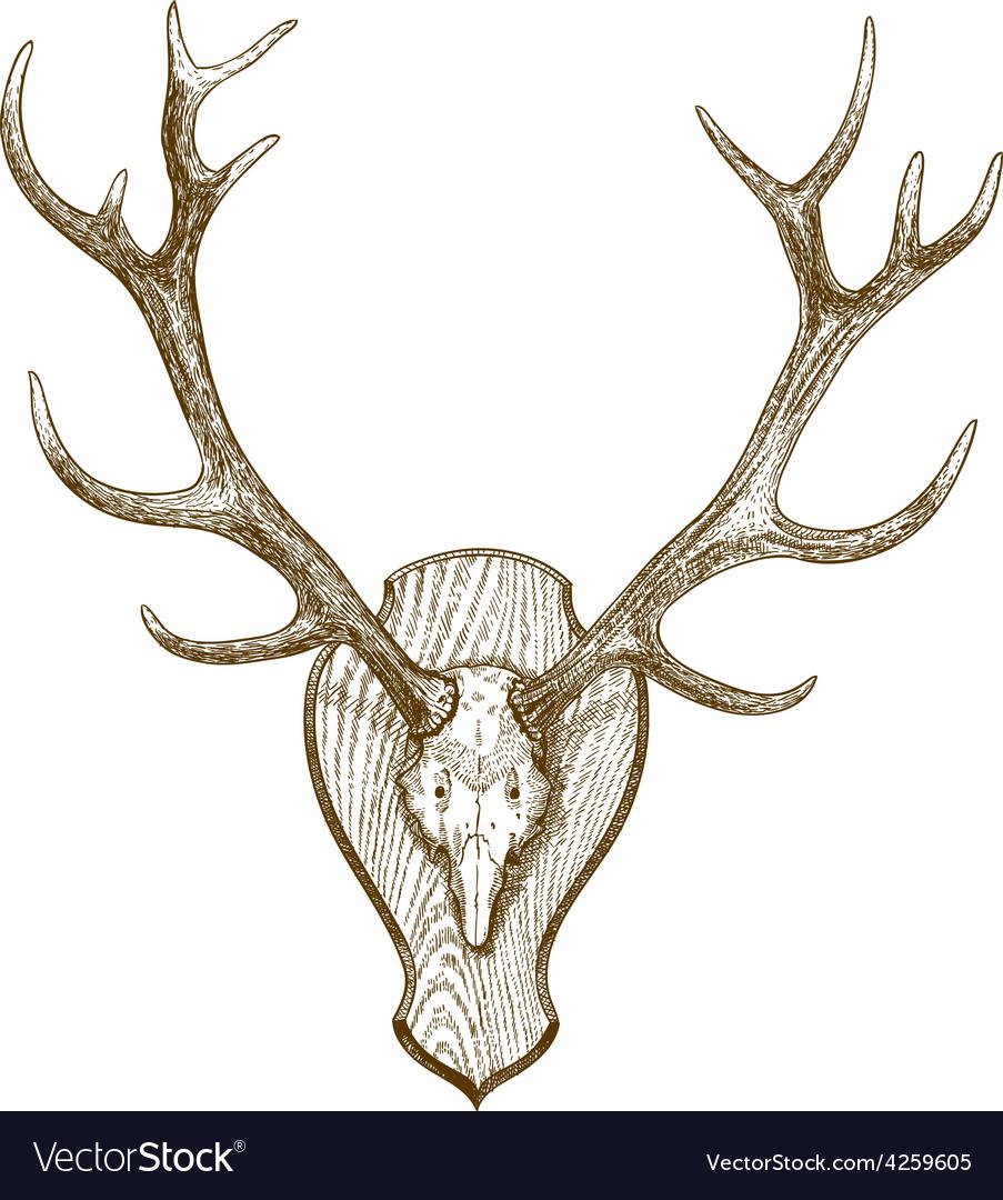 Engraving deer skull with horns vector