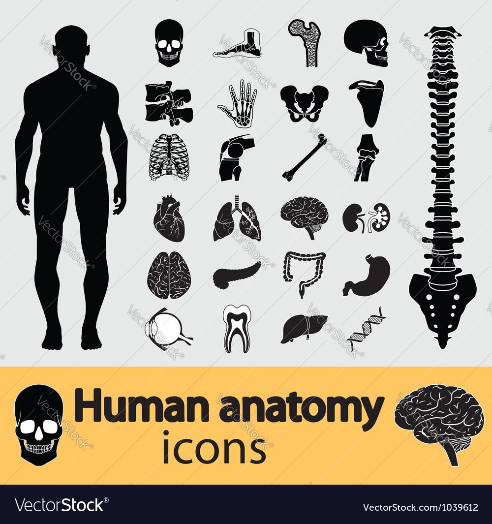 Human anatomy icons vector