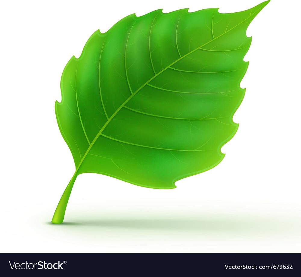 Green detailed leaf vector