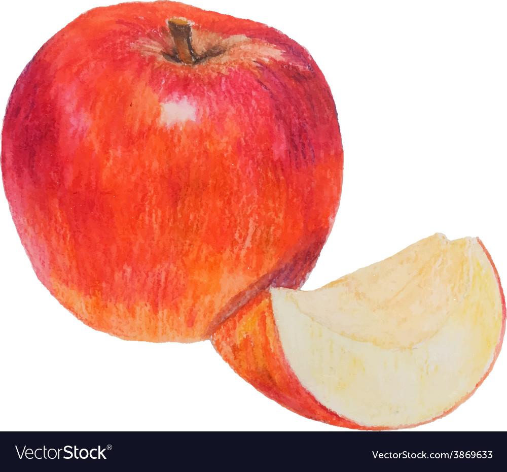 Watercolor colored pencils apple vector