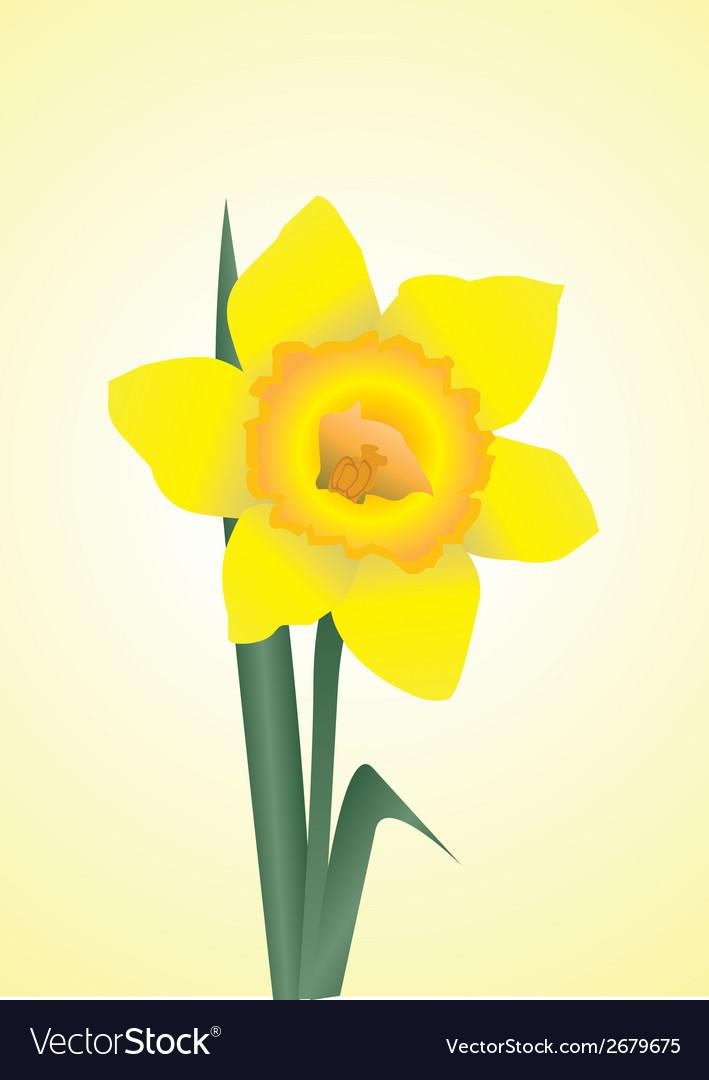 Daffodils vector