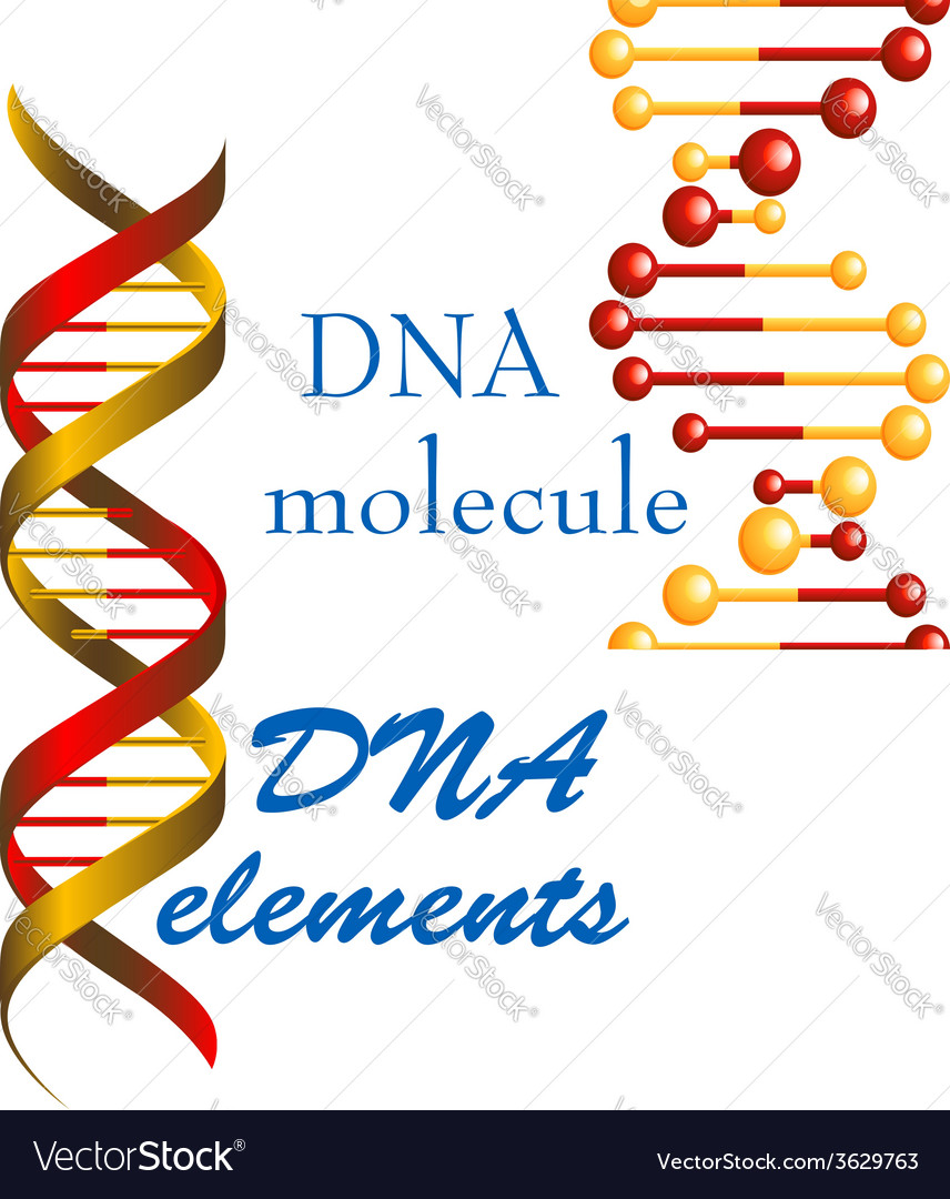 Dna molecule and elements vector