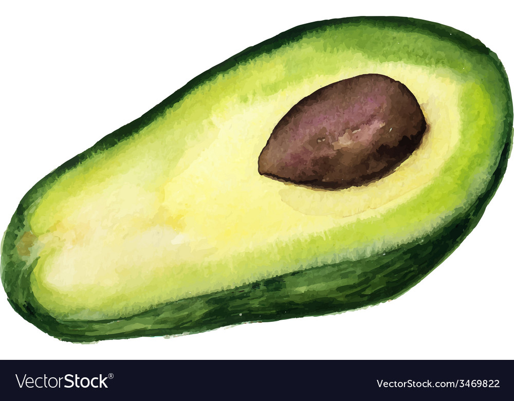 Half of avokado vector
