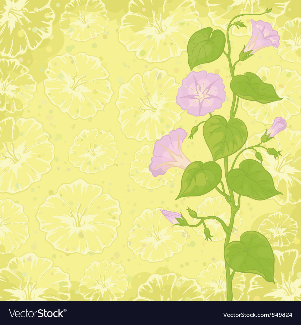 Background with flowers ipomoea vector