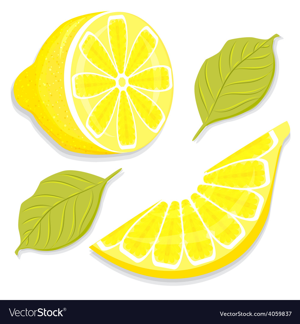 Slice and half of lemon vector