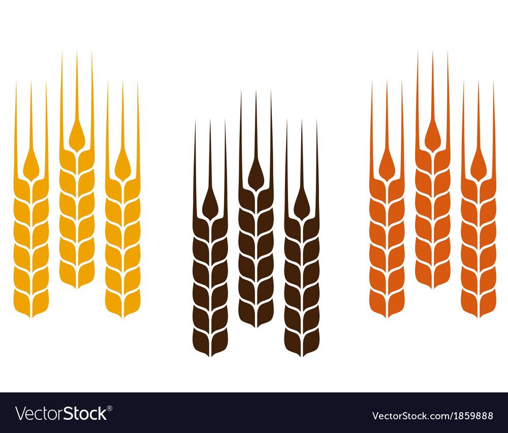 Colorful wheat ears vector