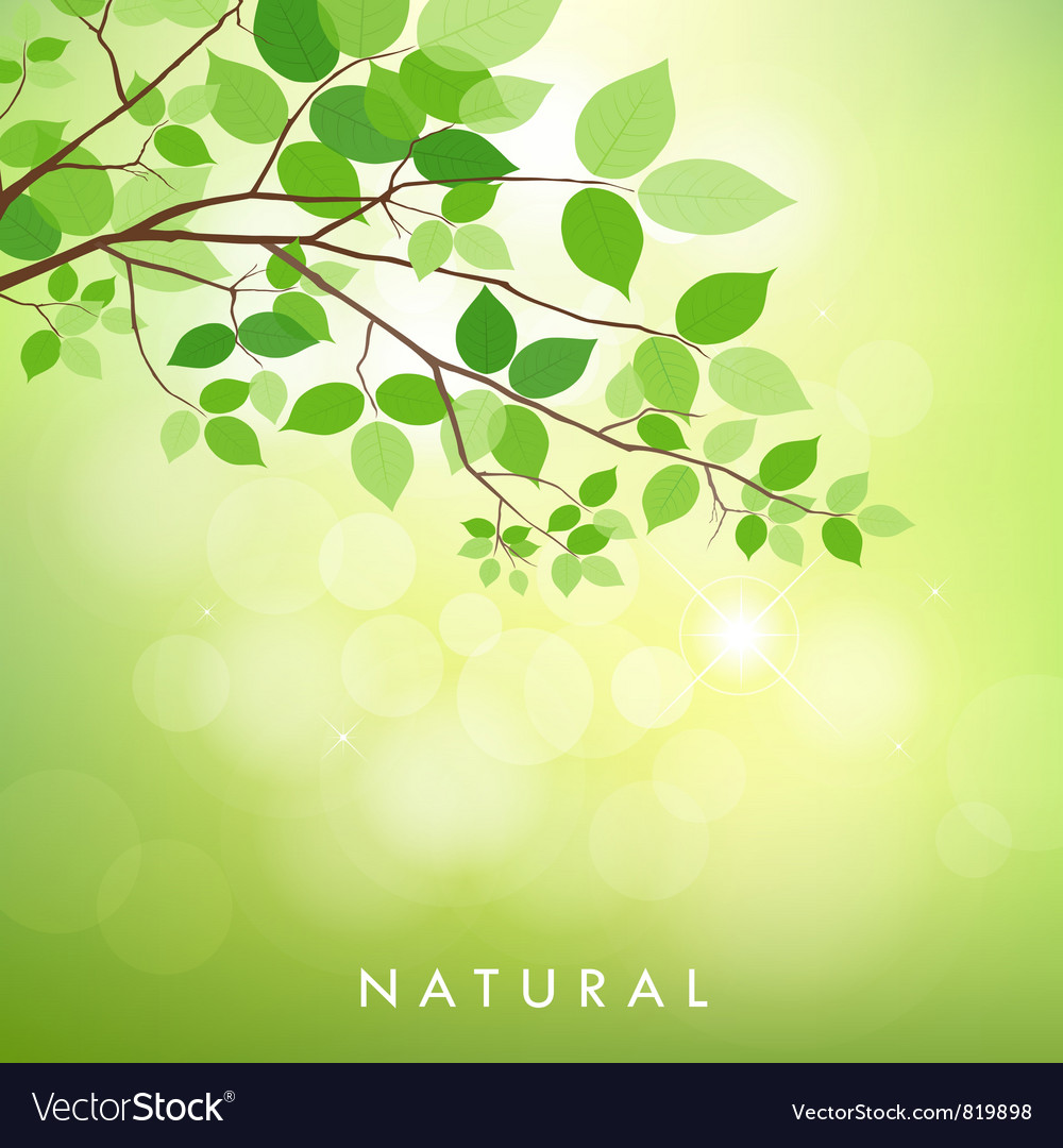 Fresh green leaves vector