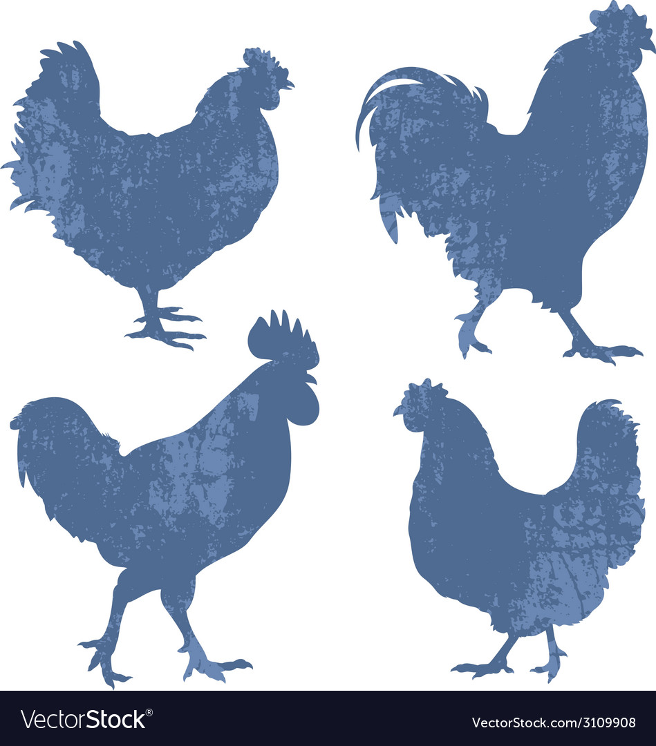 Chicken silhouette grunge vector