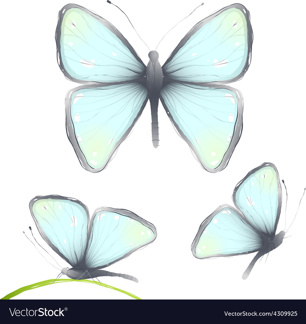 Three hand drawn delicate blue butterflies vector