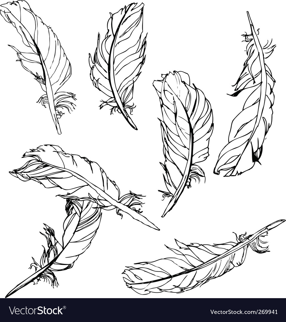 Artistic feathers vector