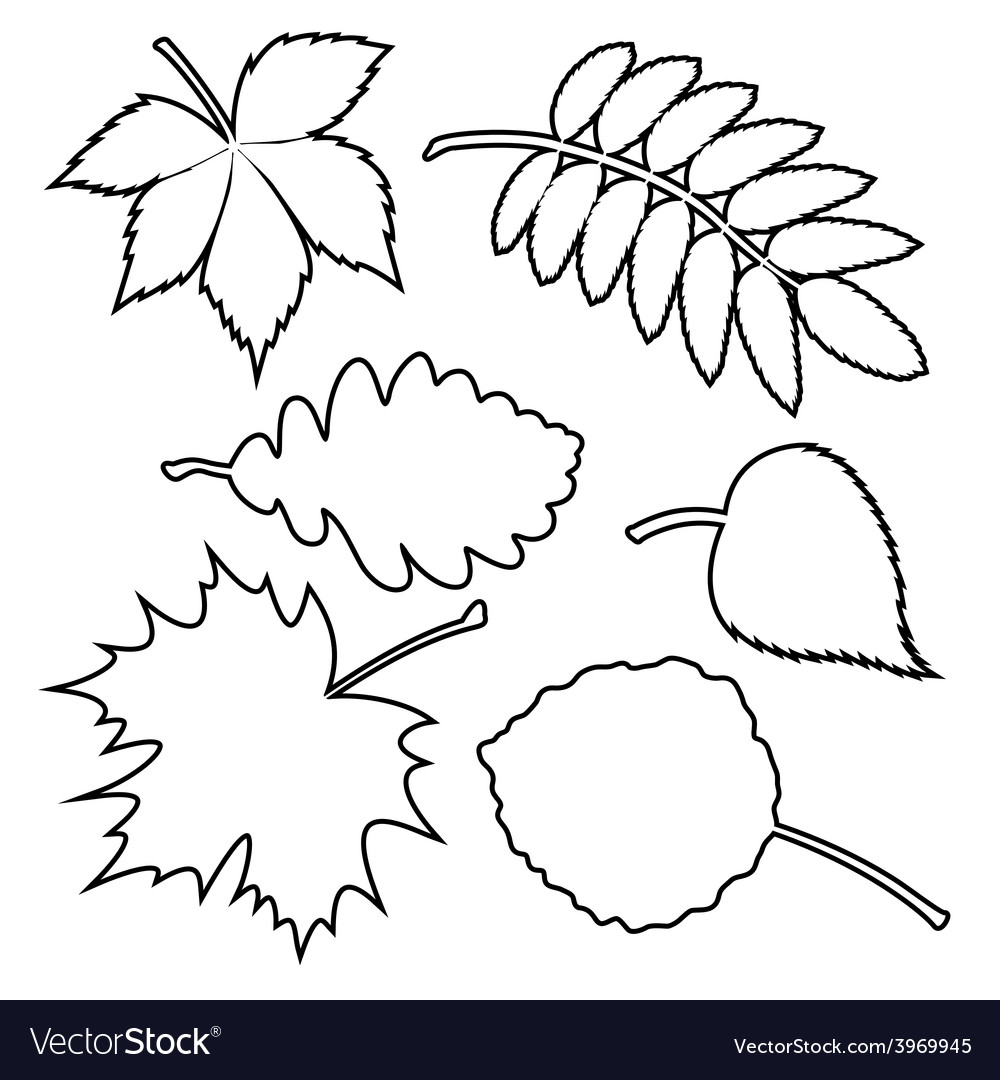 Set of silhouette leaves vector