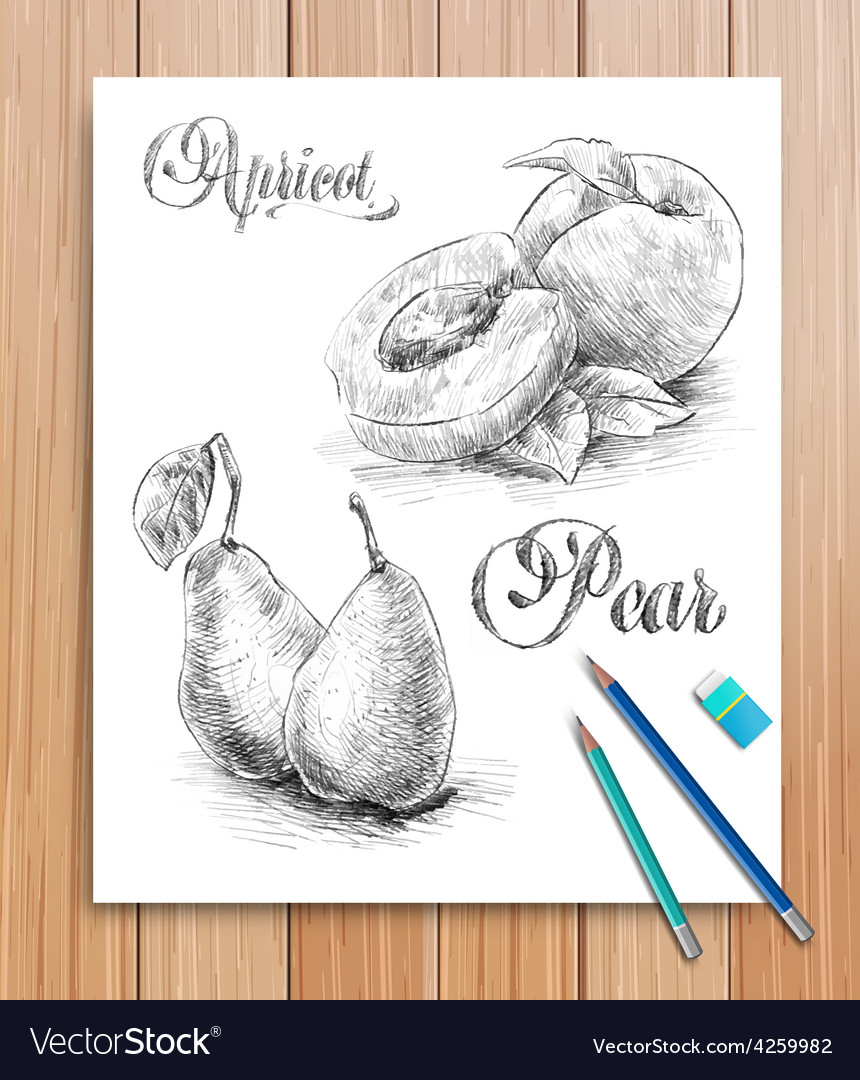 Realistic sketch of fruits apricot and pear vector