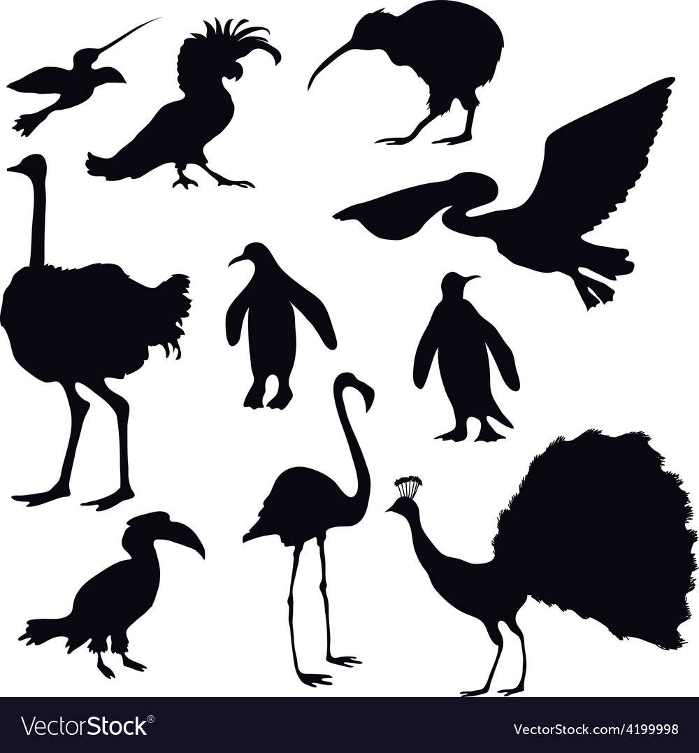 Exotic birds silhouettes vector