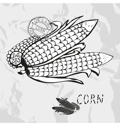 Hand drawn whole and sliced corns vector