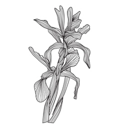 Decorative iris flowers vector