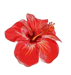 Red hibiscus flower vector