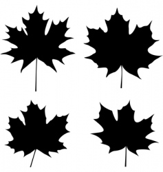 Maple leaves silhouette vector