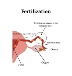 Fertilization isolated on a vector
