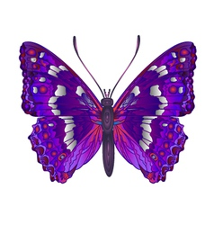 Butterfly apatura iris forest butterfly vector