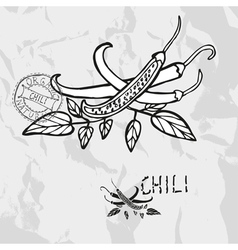 Hand drawn whole and sliced chili peppers vector