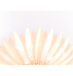 Water drops on elegant gerbera petals plus eps10 vector