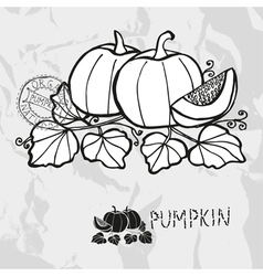 Hand drawn whole and sliced pumpkins vector