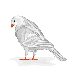 White pigeon white dove symbol peace vector