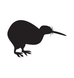 Kiwi bird isolated vector