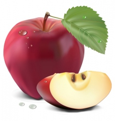 Apple and leaf vector