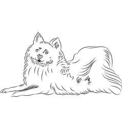 Sketch american eskimo dog breed lying vector