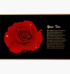 Romantic card with red rose vector
