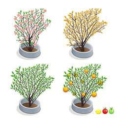 Trees in pots vector
