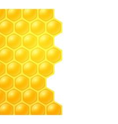 Honey bee on white background vector