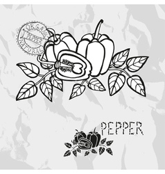 Hand drawn whole and sliced peppers vector