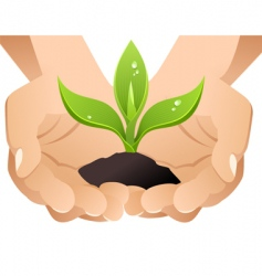 Hands with sprout vector