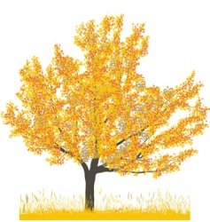 Cherry tree in autumn vector
